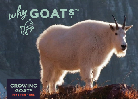 What's With The Mountain GOAT?