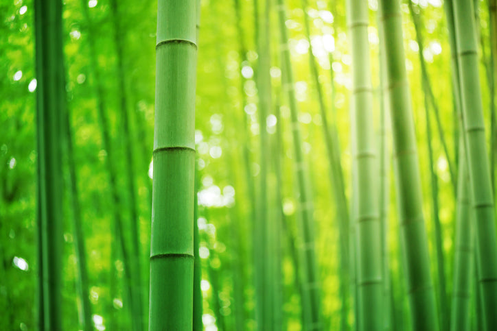 Why eating with bamboo is good for cancer patients
