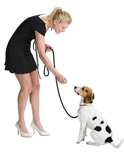 Dog Leashes