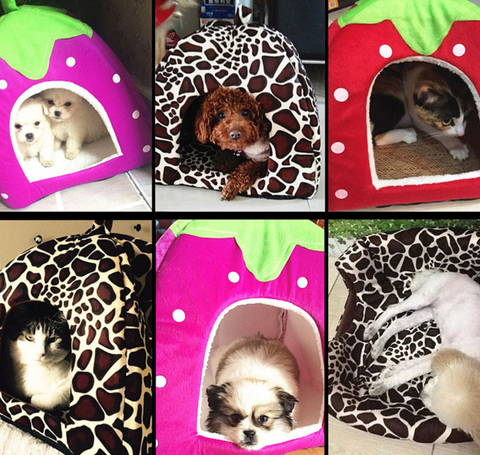 Small Dog and Cat Fruit Like Pet Bed House