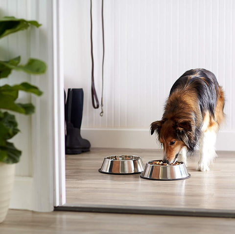 Stainless Steel Dog and Cat Bowls - pupaddict.com