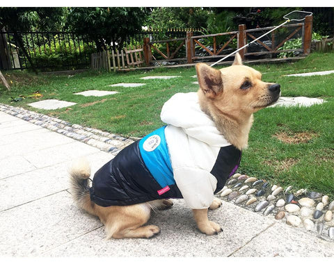 Waterproof Dog Jacket picture - pupaddict.com