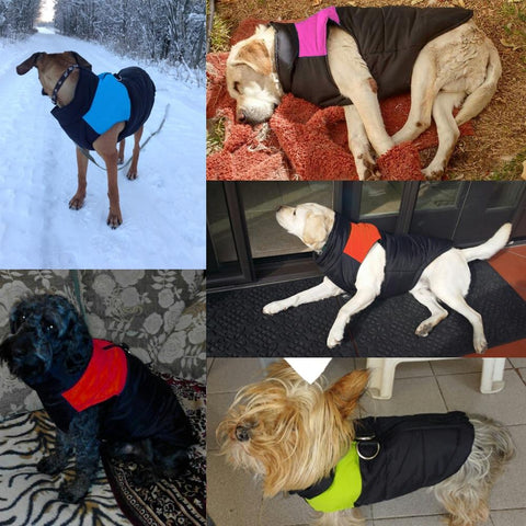 Outdoor waterproof winter dog vest jacket