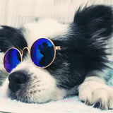 Fashion Cute Dog and Pet Sunglasses | PUP ADDICT