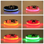 Dog Collar Safety Glowing Pet Collar | PUP ADDICT
