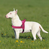 Nylon Reflective No Pull Strap Dog Harness | PUP ADDICT