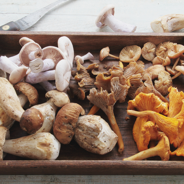 Beta Glucans: The Healing Compounds in Mushrooms