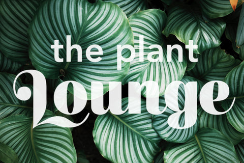 The Plant Lounge Gift Card