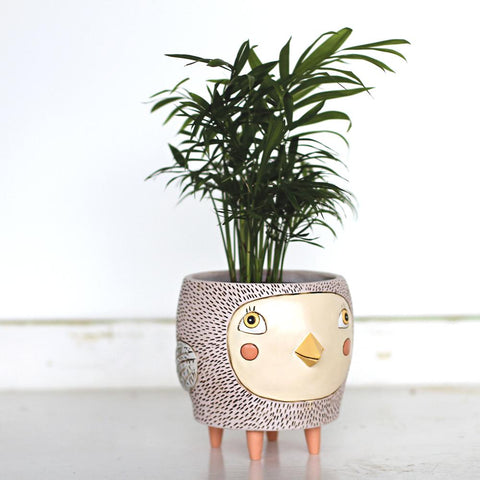 Bye Bye Birdie Planter The Plant Lounge Indoor Plants Nundah Brisbane