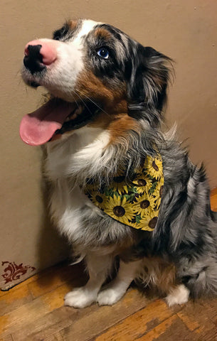 Sunflower Patch Bandana