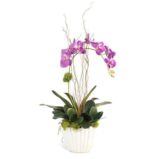 John Richard Vibrant Asian Orchid
