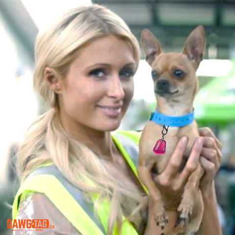 Paris holding her dog Tinkerbell wearing a DawgTag