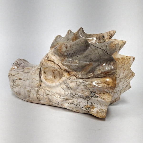 Petrified Wood Dragon Head