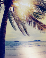 Palm Tree Coastline Sunset Wall Mural #6040