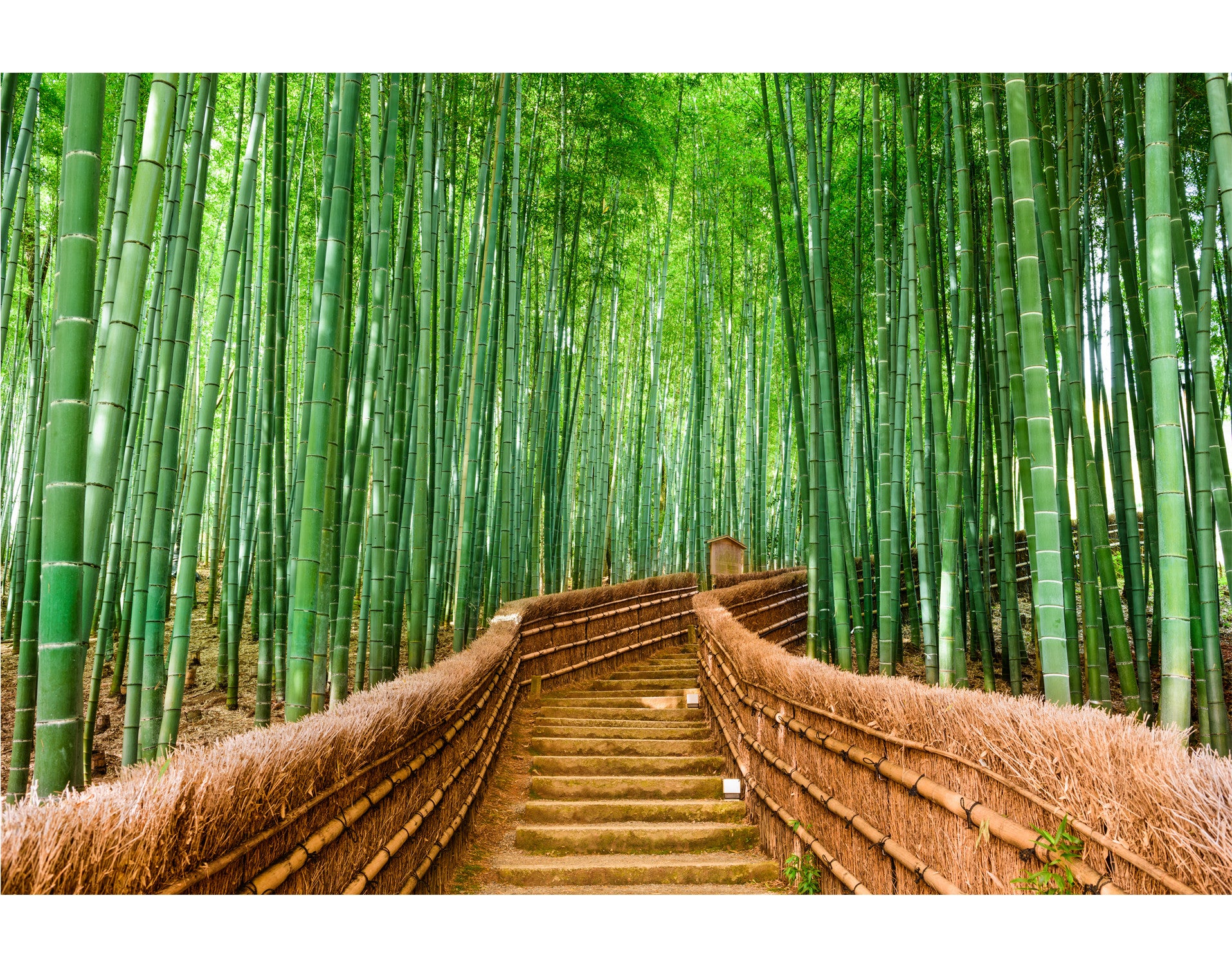 Bamboo forest wall mural 6043 for Bamboo forest wall mural