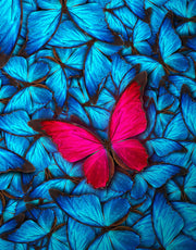 Butterfly Wall Mural Blue and Red Butterflies. #6047