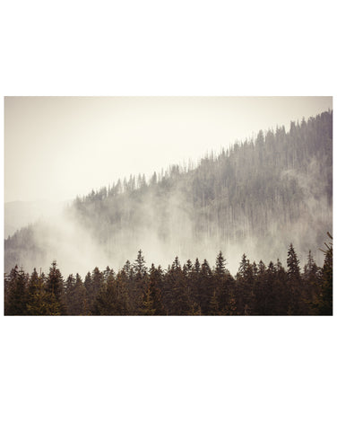 Foggy Misty Forest Tree Over Mountain Wall Mural. #6171