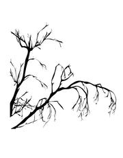 Weeping Tree Branches Vinyl Wall Decal. #AC147