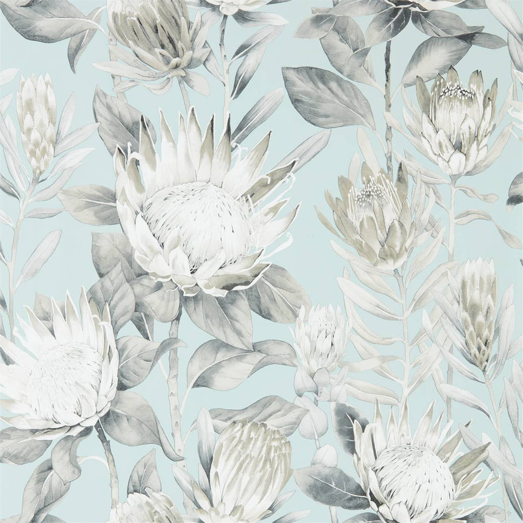 Floral Wallpaper Australia | King Protea