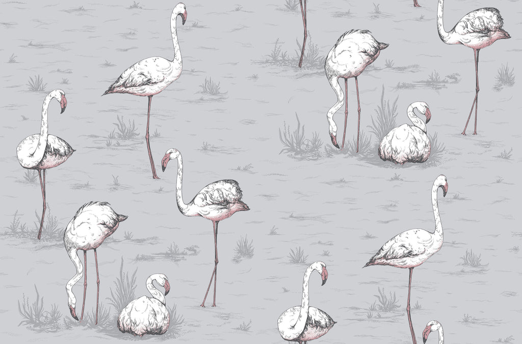 Cole & Son Flamingo 112/10040 | Buy in Australia