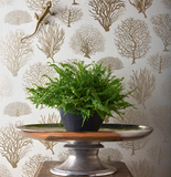 Cole & Son Wallpaper. Seafern 107/2010