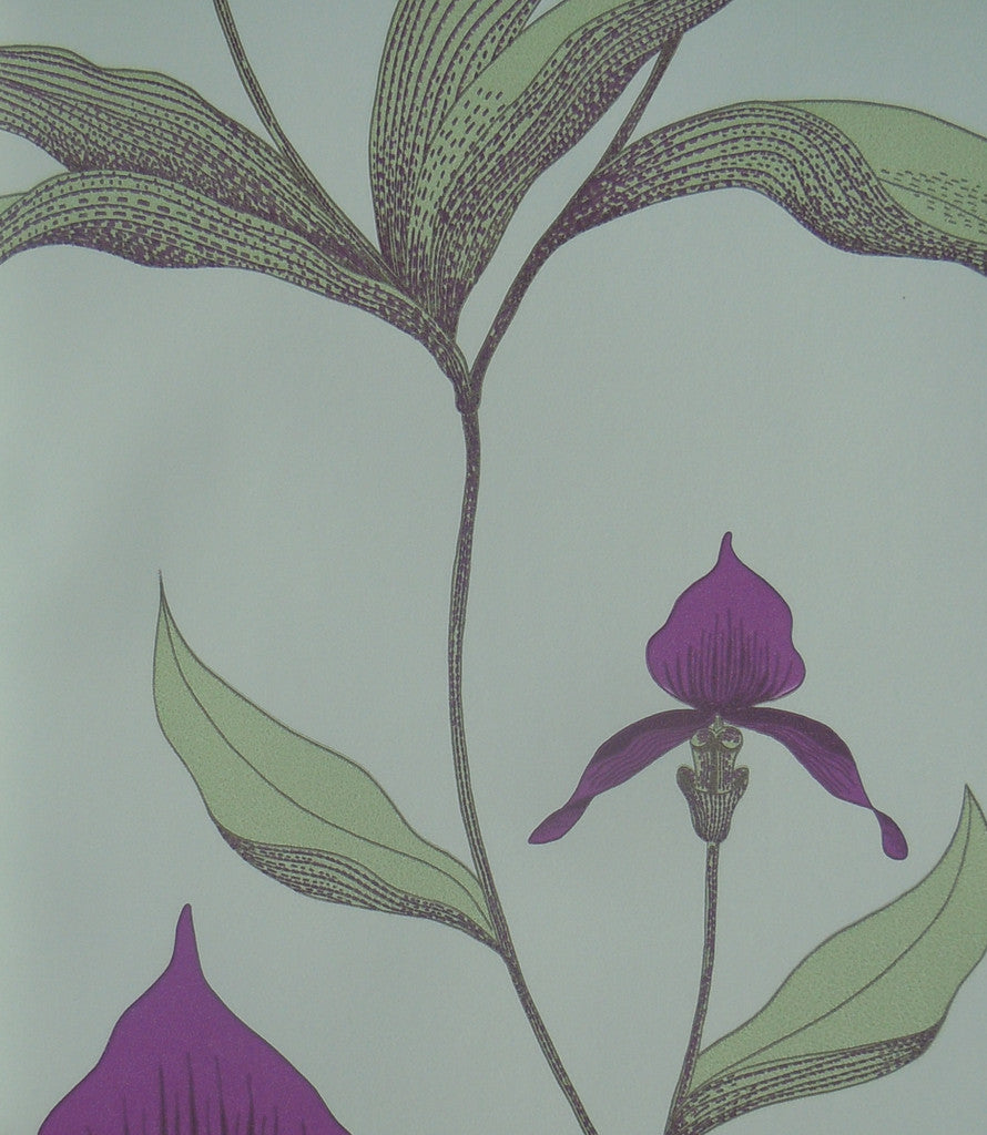 Cole & Son Orchid Wallpaper 66/4027 from the Contemporary Collection