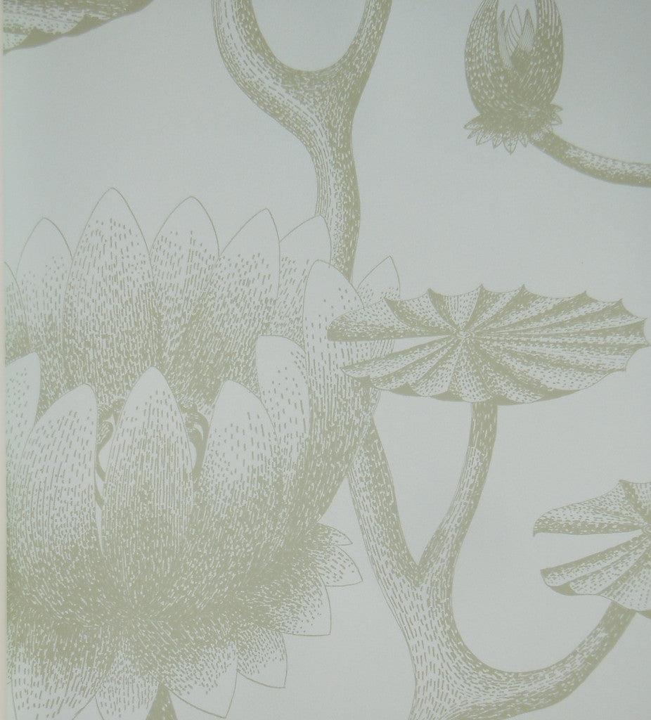Cole & Son Wallpaper Australia | Lily Wallpaper 69/3112 from the Contemporary Collection