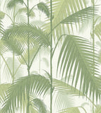 Palm Jungle Cole & Son Wallpaper 95/1001 in Australia. Green Olive & White