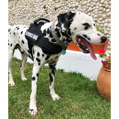 Service Dog Harness / Vest - No Choking Adjustable Nylon Reflective Comfortable Ergonomic Harness