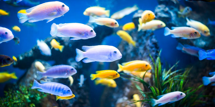 Just Keep Swimming: Common Fish Diseases and How to Avoid Them