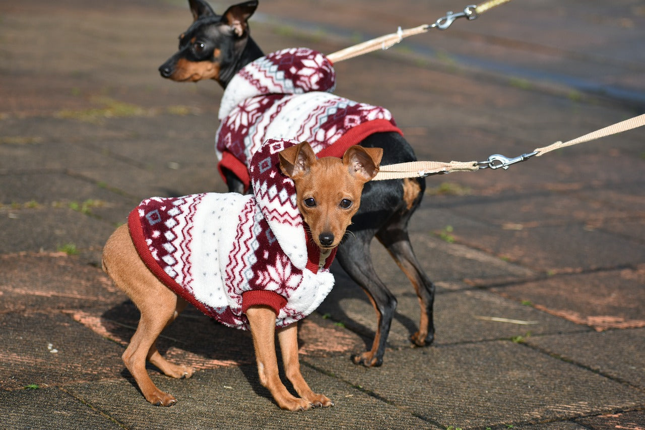 Trends in Pet Apparel