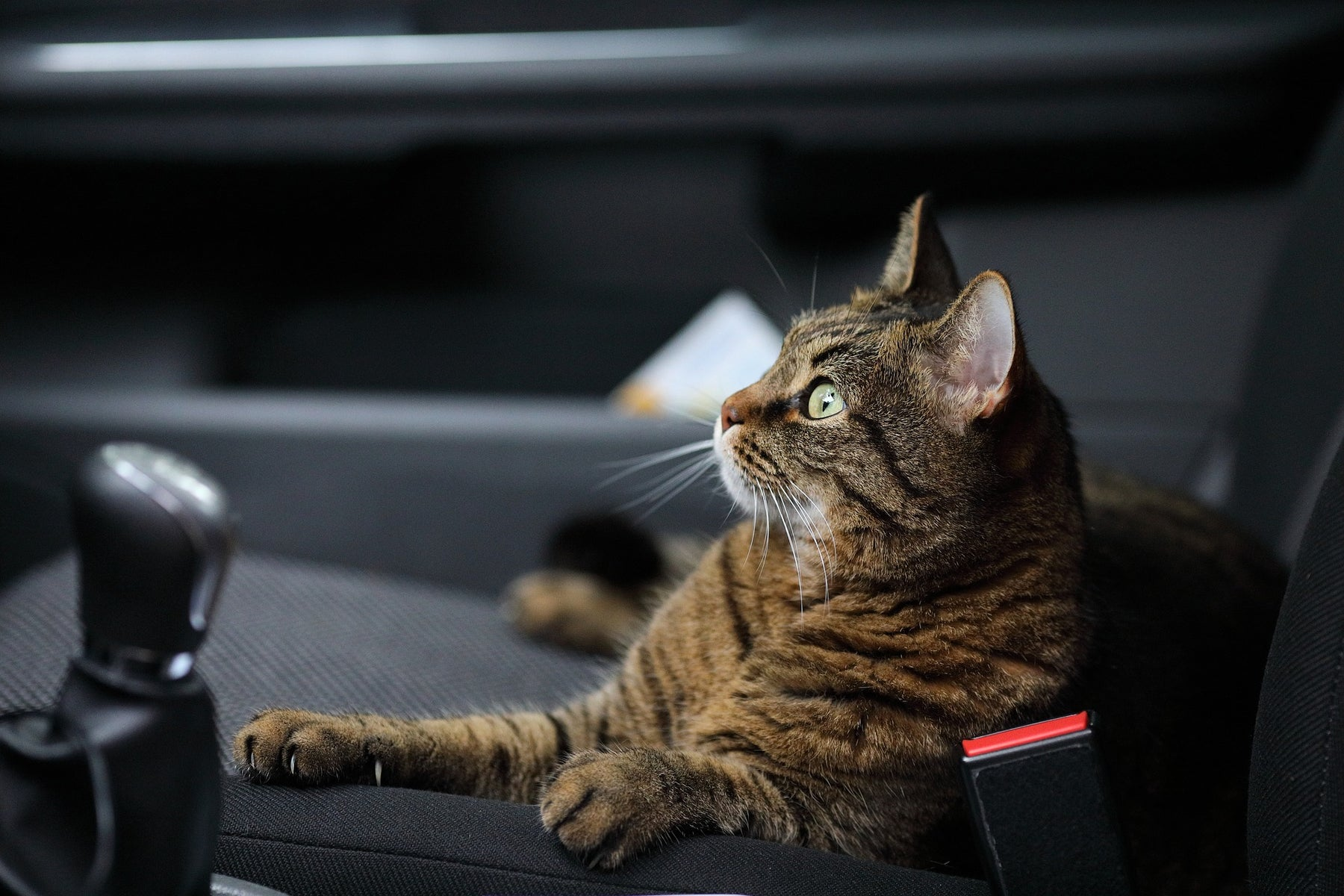 Road Trip for Cats