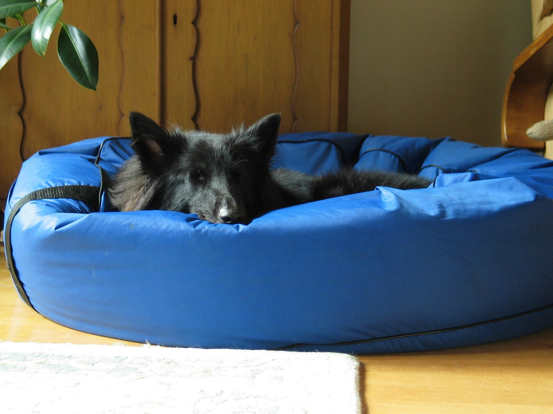 Different Types Of Dog Beds