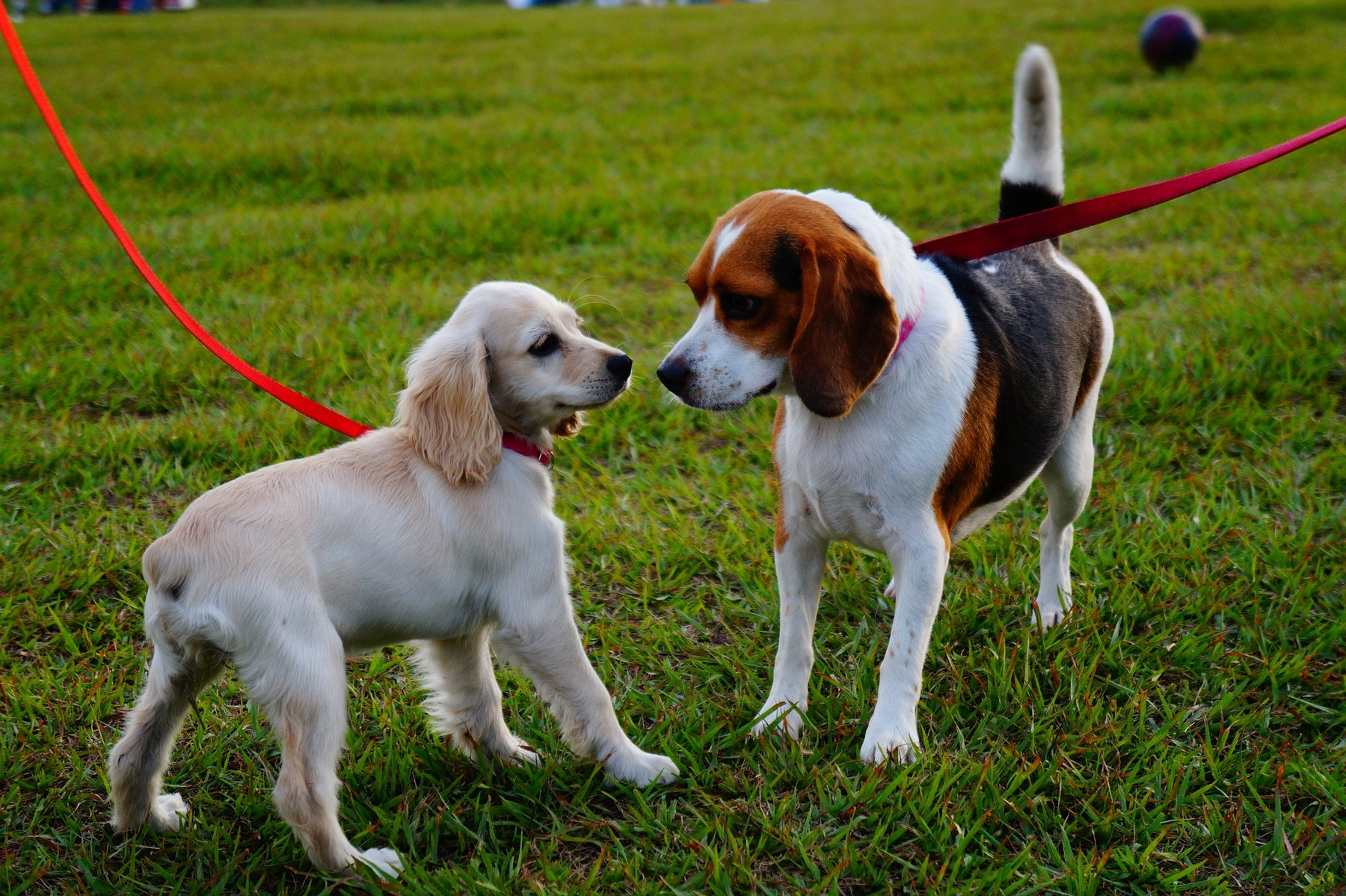 Training Your Dog From the Pad to the Yard