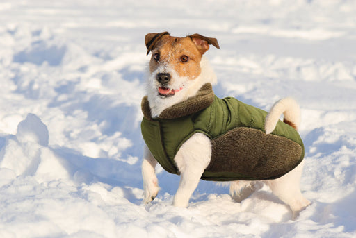Fashion Pet Olive Puffy Coat with Sweater Trim