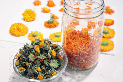 How to dry calendula