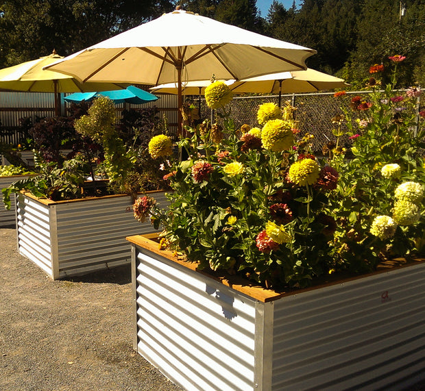 Avalow Full-Size Planters