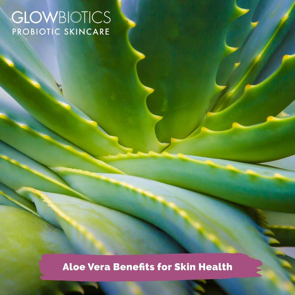Aloe Vera Benefits for Skin Health