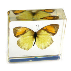 BF02<br />Yellow Orange Tip Butterfly<br />