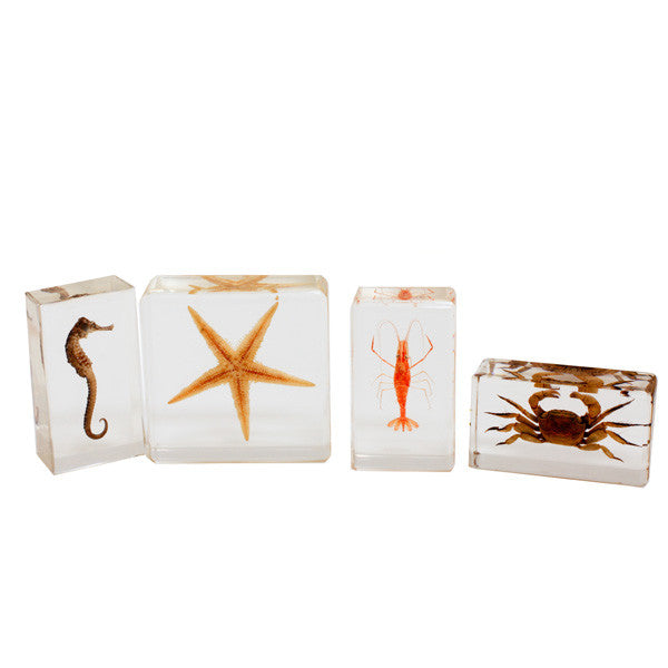 BFK1301<br />Biology for Kids-Sea Life Specimen Set