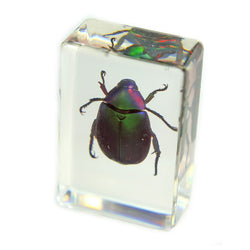 PW104<br />Chafer Beetle<br />