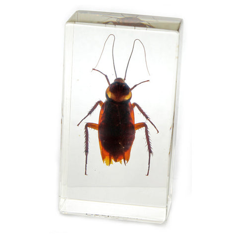 PW206<br />Cockroach<br />