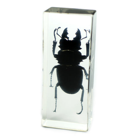 PW301<br />Stag Beetle<br />