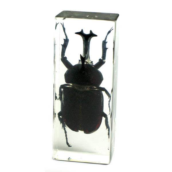 PW310<br />Rhinoceros Beetle<br />