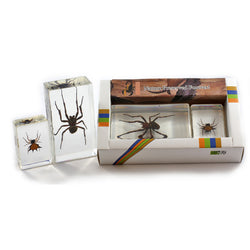 PWC423<br />Spider Collection<br />