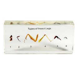 T215<br />Types of Insect Legs Mount