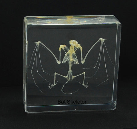 T303S<br/> Bat Skeleton, Small