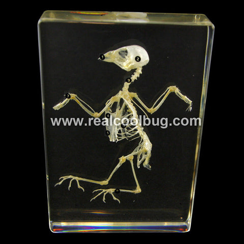 T304<br />Bird Skeleton<br />