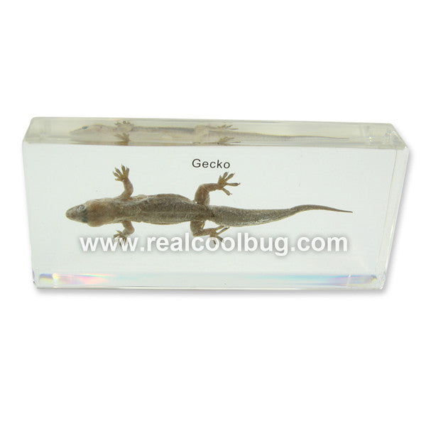 T409<br />Gecko<br />