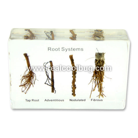 T701<br />Root Systems Plasmount